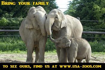 family-zoo
