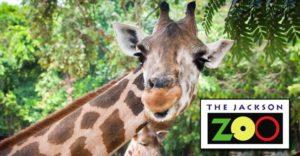 jackson-zoo