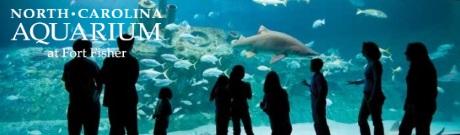 north-carolina-aquarium-fish-tank2