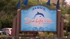 sea-life-park